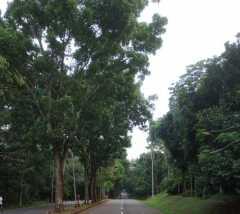 Jaga kualitas oksigen, Pemkot Depok larang warga tebang pohon sembarangan